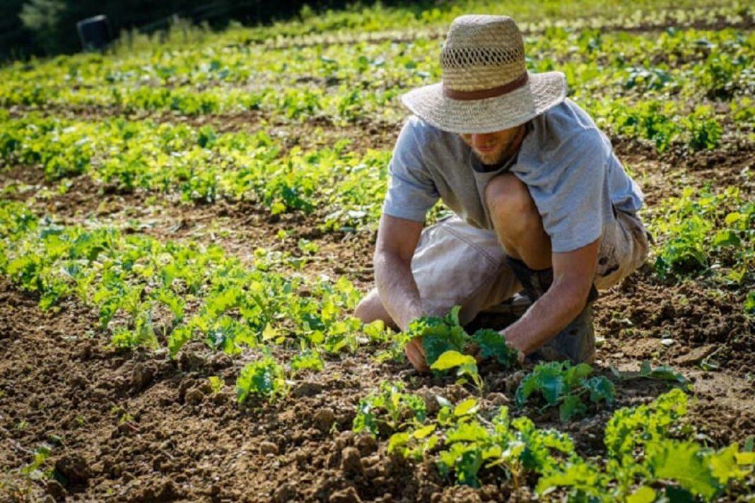 Un giovane agricoltore